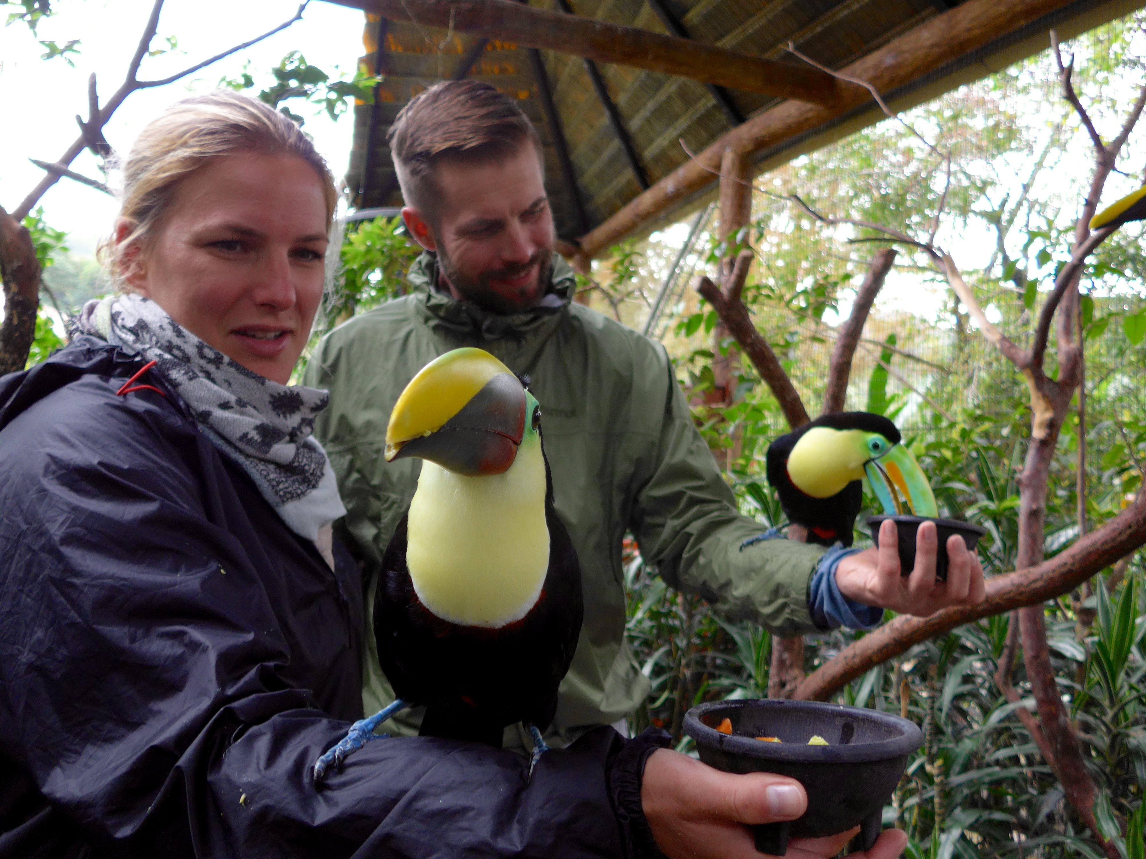Mit Abstand die schönsten Vögel des Planeten: Tukane.
