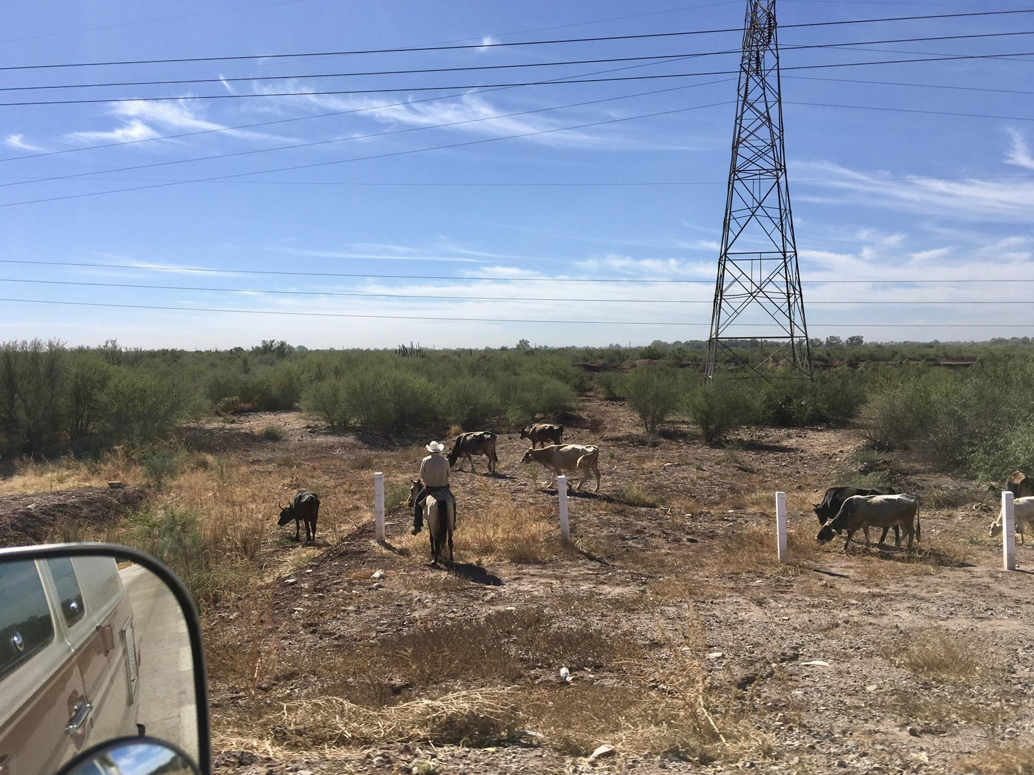 Am Straßenrand sehen wir viele Vaqueros, mexikanische Cowboys.